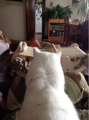 Lap Loom vs. Lap Cat